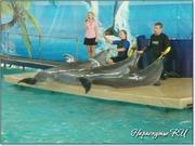Артисты дельфинария в пос. Партенит