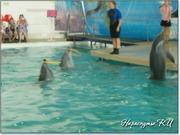 Выступление дельфинов с обручами