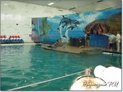 Фотосессия с дельфином