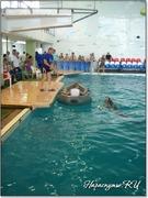 Катание на лодке с дельфином