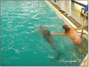 Плавание с дельфином в Партените