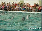 Танго дельфинов в Партените